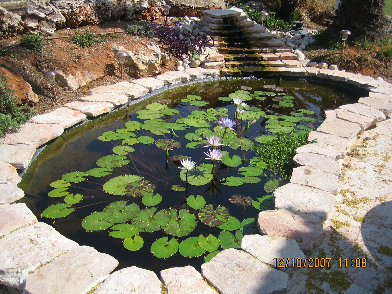 My 600g koi pond i know what i did this past summer for Algae eating fish for ponds